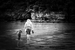 63+012: The Walk - Clontarf Beach, Sydney, NSW, September 2016 (geemuses) Tags: dogs canines poodles rescuedogs issy nsw sydneyharbour northernbeaches dogbeach dogwalk georginaswan clontarfbeach