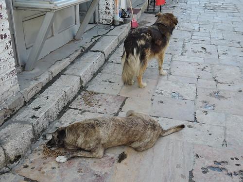 Street dogs in Skopje's Old Town