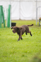 Kent_County_Show_2014_Highlights_041