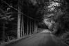 7579 (peladomal ) Tags: road bw patagonia argentina ruta strada camino carretera monochromatic bn route estrada neuquen rodovia villalaangostura monocromatico surargentino