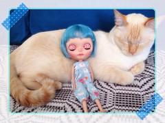 E a Cora, cansada da viagem, resolveu tirar uma soneca com o novo amigo: o gato Brigadeiro...
