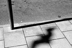 31052015 (M N Edwards) Tags: shadow bird beach 35mm seaside nikon pavement seagull streetphotography pole aberystwyth d3000