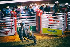 bronc (DJHuber) Tags: bareback back cowboy bare wranglers rodeo bronco bud day4 budweiser bronc wrangler calgarystampede 2016
