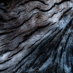 Driftwood 024 (noahbw) Tags: wood light abstract beach square log nikon natural decay erosion driftwood treetrunk weathered d5000 mccormickwoodsnaturepreserve noahbw