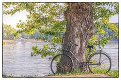 Old bicycle near the Danube (Draen Kosijer) Tags: dunav danube river bicycle bicikl reka leto summer tree plant water