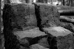 IMG_1572 (Lorenzo Pauselli) Tags: altoadige sdtirol vacanze castelrotto 2016 estate dolomiti montagna streghe valli rocce funghi fungo portraits ritratto primopiano scattirubati