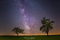 Milky Way Dreams (Dennis Kirstein) Tags: panorama tree tower nature night germany stars landscape corn nightshot wheat sony natur galaxy schwarzwald blackforest milkyway kaltenbronn milchstrase astroscape