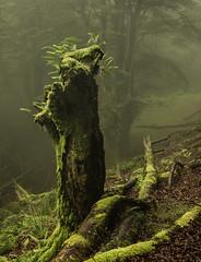 R E S O L V E (wilsonaxpe) Tags: resolve green enchanted wood forest verde vizcaya paisvasco orozko bosqueencantado