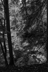 Conkle's Hollow, Ohio (Stephen A. Wolfe) Tags: 35mm swolfe2000 adobelightroom adobelightroomcc agfa agfaapx100 canoscanfs2710 conkleshollow hockinghills kodakhc110 nikonfm3a blackandwhite film httpstephenwolfephotography landscape nikkor24mmf28ais filmdev:recipe=10741 agfaagfapanapx100 film:brand=agfa film:name=agfaagfapanapx100 film:iso=100 developer:brand=kodak developer:name=kodakhc110