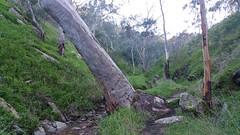 20160716_145941 (StephenMitchell) Tags: adelaidegreenhills nature organic trees gully valley hill mountain blackwood belair edenhills southaustralia trek walk creek rock stone