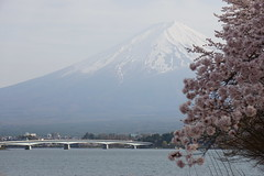 Mt. Fuji & North Shore of Lake Kawakuchiko Cherry Blossom Festival (1) (Planet Q) Tags: japan mtfuji lakekawaguchi