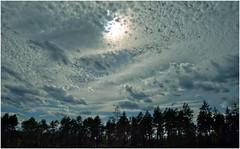 Northern Sky (II) (kurtwolf303) Tags: sweden schweden sky himmel clouds wolken dramatic dramatisch trees bume skandinavien skandinavia olympusem1 omd microfourthirds micro43 unlimitedphotos systemcamera flickrelite sverige 250v10f topf25 europe skyscape blue blau topf50 500v20f topf75