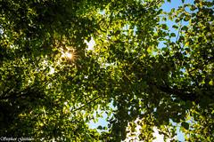 Unterm Birnbaum - Under the pear (Stephan Gthlein Fotografie) Tags: deutschland germany markbrandenburg mrkischoderland badfreienwalde heimat birnbaum pear schatten shadow sun sonne