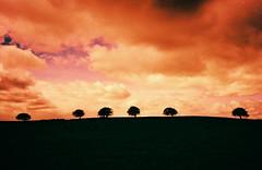 Skyline (megalithicmatt) Tags: xpro konicaa4 astia100f insch trees horizon coldhome