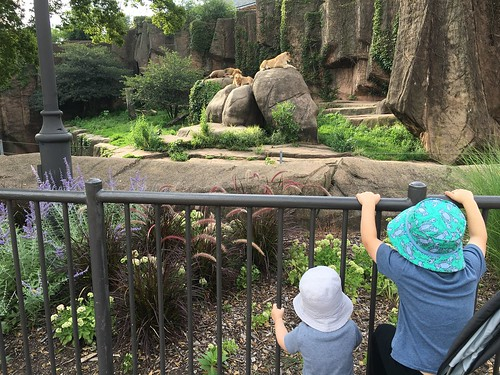 Early morning Lincoln Park Zoo.