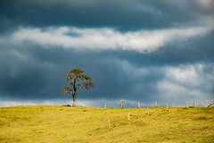 One Tree Mountain (arrtpics) Tags: tree field clouds colour color canon70d learning ameture havingfun landscape