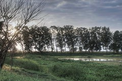 sunset and a pond (nald_babaran) Tags: sunset trees pond pool filipino philippinen grassland wildflower eos canon hdr green field wetland grass plants sun sunrays silhouette reflections shadow bird birdnest nests fishpond clouds cloudy sky sunshine atardecer mahogany