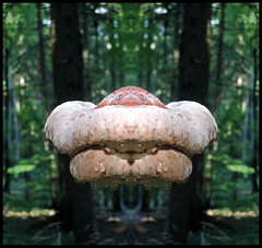 THE HUNTING HUNGRY HAUNTED HOVERING KISS (LitterART) Tags: kuss kiss appetit nikon p330 hyperreal wald wood forest tropfen wasser water drops sweeting haunted scary weird levitation
