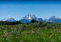 Summer in the Tetons (Frank McNamara) Tags: meadow mountain summer wildflowers grandtetons droh