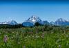 Summer in the Tetons (waywardtraveler) Tags: meadow mountain summer wildflowers grandtetons droh