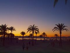strand mit palmen P9060862 (hans 1960) Tags: strand beach silhouette malle mallorca palmen farben colours spanien himmel sky jungles people wasser water meer landschaft landscape