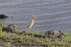 _MG_7831 (farhan1mirza) Tags: wild nature animal canon kenya wildlife 6d nnp nairobinationalpark