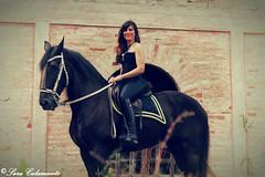11_b (Sara_Calamante) Tags: horses horse photography photoshoot fotografia cavalli cavallo photoshooting