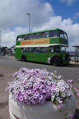 IMGP3483 (Steve Guess) Tags: uk england bus bristol southern vectis dorset gb poole ld lodekka