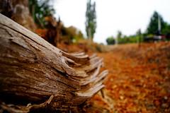 Trunk Shattered (Cmuozfernandez) Tags: trunk tronco arbol tree sky cielo verano summer roto break quebrado