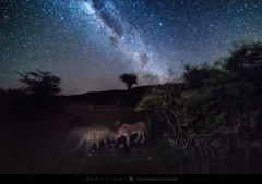 Nature Of The Beast (The Art of Night) Tags: theartofnight africa kenya maasai mara astrophotography bushtops camps kill landscape lion lions nature photography safari sky stars maasaimara bushtopscamps