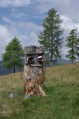 Arriach (Harald Reichmann) Tags: krnten arriach wllanernock buchskofel landschaft alm baum lrche wiese gras baumstamm leck salz wchter alltagskunst arriachextreme