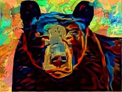 into the wild: bear (boriches) Tags: bear brown yellowstone park alaska canada