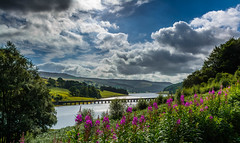 Ladybower From Fairhomes , Aug 2016 (johngregory250666) Tags: tree morning outside lane peak district uk derbyshire rural nature british countryside camera lens green yellow orange stone nikon nikkor hiking walking lines clouds sky blue moss lichen out brook glow grass imagesofengland amazing sunlight water light sun outdoor grassland field landscape hill trees plant serene forest moors ridge great national park mountain moor moorland dale cressbrook july new mountainside people photoadd
