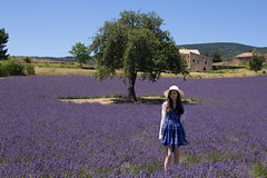 in a lavender field in provence (SanctyYumi) Tags: provence france lavender nature purple