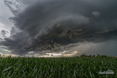 Under the Rising Scud (kevin-palmer) Tags: storm stormy thunderstorm sky severe weather shelf shelfcloud clouds windy gustfront outflowboundary arcuscloud vale southdakota july summer nikond750 tokina1628mmf28 cornfield evening rain scud