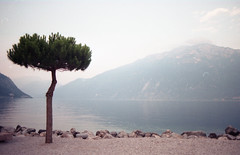 Limone sul Garda - Film (Alessandra Papagni) Tags: outdoor aperto lago lake garda limone italia italy italie water acqua landscape paesaggio relax pace peace indie hipster dream dreamy pastel color eau lac paysage analog photography fotografia analogica analogic analogue argentique 35mm 35 mm 50mm 50 canon ae1 ae 1 film roll rolls pellicule kodak plus colorplus 200 iso asa tree albero nature natura natural naturale light luce morning afternoon pomeriggio sole sunny summer travel holiday vacanza vintage sky cielo ciel green blue