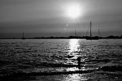 Despidiendo el sol (ZAP.M) Tags: naturaleza nature atardecer sunset reflejos contraluz siluetas canstipetri chiclana cdiz amdaluca espaa flickr zapm mpazdelcerro nikon nikond5300