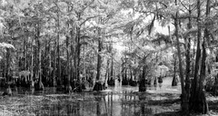 Lake Cheniere-HSS (VarietyHour) Tags: outdoor lake water moss blackandwhite monochrome slidersunday hss