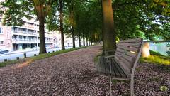 Il ne manque plus que les amoureux (Ath Salem) Tags: quai des ardennes amoureux rose banc liege belgique belgium belgie fleurs luik promenade visite ourthe meuse belle ile