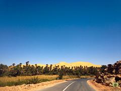 La grande dune de Taghit surplombant la palmeraie (Ath Salem) Tags: algrie bchar taghit beni abbes kenadsa barrage djorf torba dsert sahara tourisme dcouverte palmeraie           dunes zousfana saoura