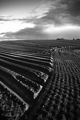 Earth Pattern (e.v.r.i.e.l) Tags: bw sculpture field lines skyline contrast landscape countryside pattern belgique earth champs culture fields agriculture paysage campagne perspectivenhorizon