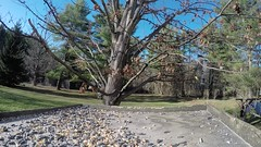 Nuts For GoPro Squirrel (Photographic Poetry) Tags: birds spring squirrel nuts birdfeeder seeds sunflower april gopro goprocamera