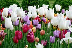 (cscammahorn) Tags: park city flowers garden kansas loose