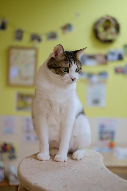 ai-cat 02