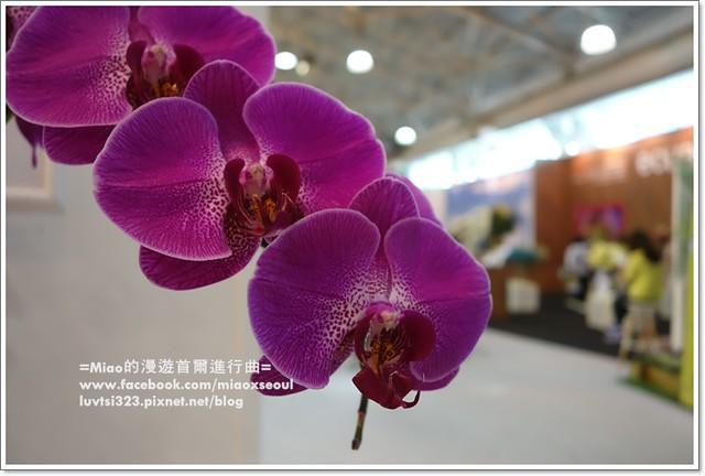 고양국제꽃박람회026