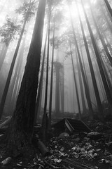 Eerie Walking Through the Woods (craigmdennis) Tags: canada mountains squamish thechief