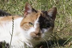moupy (w.vandervet) Tags: kat