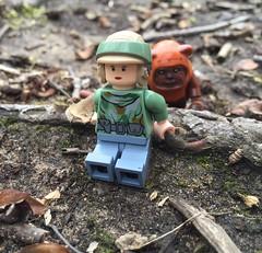 Little does she know... (Averey Man) Tags: starwars lego ewok princessleia legostarwars wicket endor