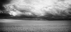 Corn field (cottagearts123) Tags: summer white black clouds landscapes blackwhite breath norfolk infrared cornfields taking