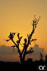 Sunset (AR's Photography) Tags: sunset village countryside landscape sialkot pakistan nikond5200